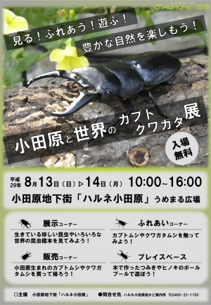 【小田原と世界のカブト・クワガタ展】